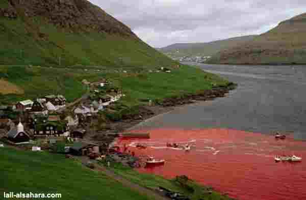 delfinschlachten1.jpg