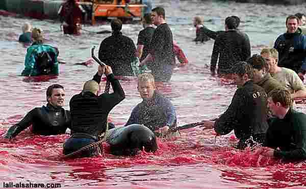 delfinschlachten3.jpg