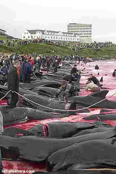 delfinschlachten4.jpg
