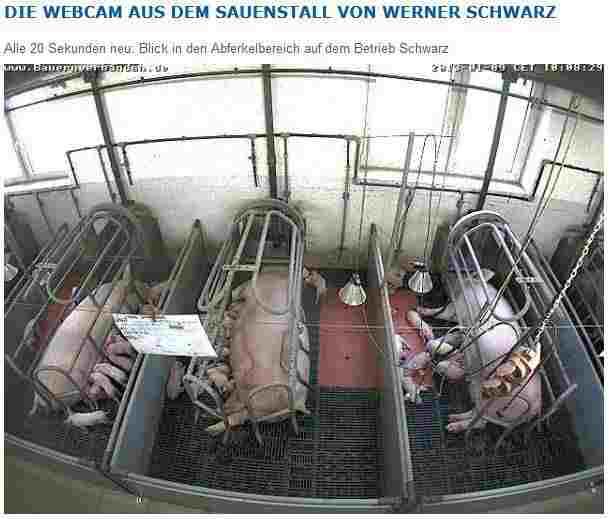 sauenstall.jpg
